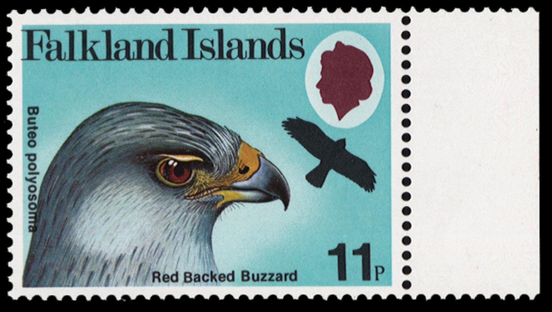 FALKLAND ISLANDS 1981  SG385w Mint