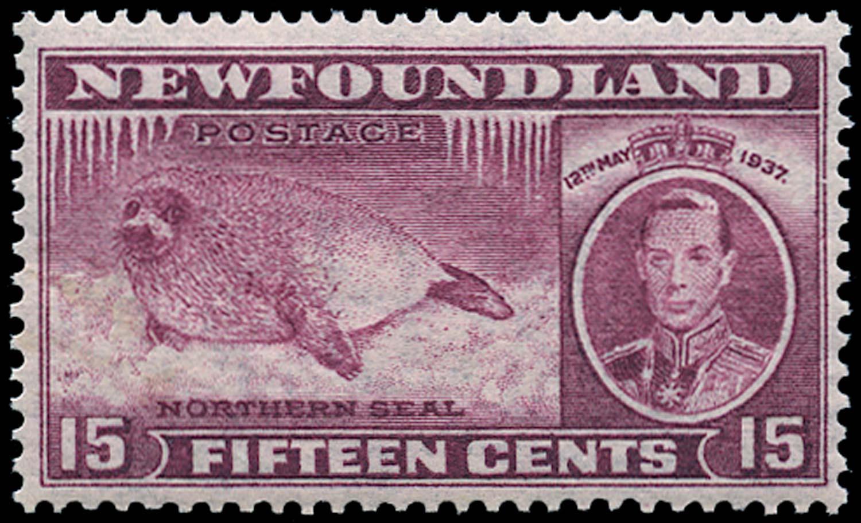 NEWFOUNDLAND 1937  SG263d Mint Coronation 15c Seal comb perf 13 unmounted