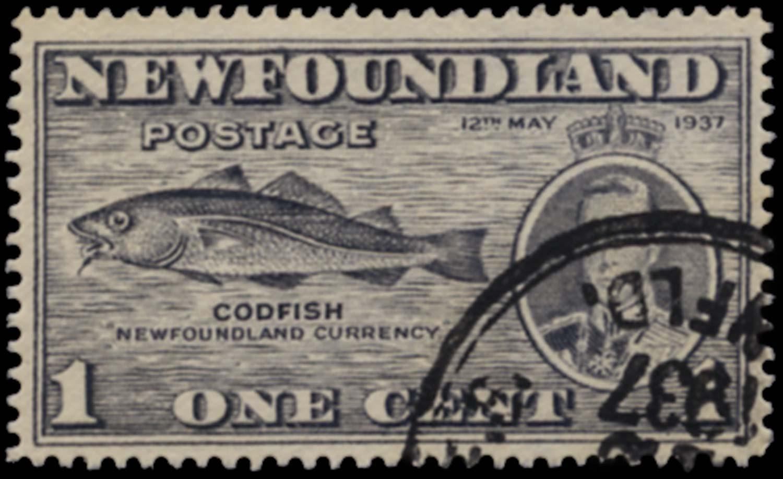 NEWFOUNDLAND 1937  SG257da Used Coronation 1c perf 13½ variety Fish-Hook