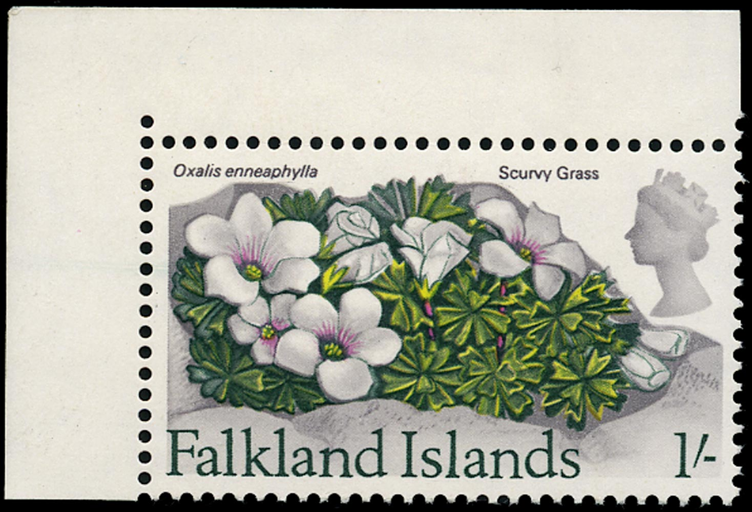 FALKLAND ISLANDS 1968  SG240w Mint unmounted Flowers 1s Scurvy Grass variety watermark inverted