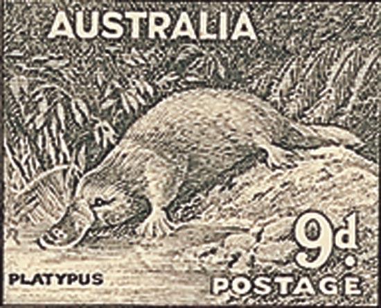 AUSTRALIA 1956  SG230c unmounted