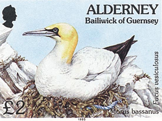 Alderney 1995  SGA77 unmounted mint