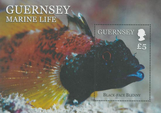 Guernsey 2013  SGMS1456 unmounted mint